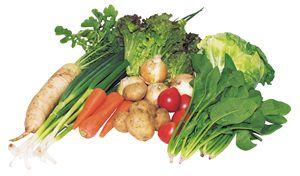 大地のめぐみ 有機野菜BOX