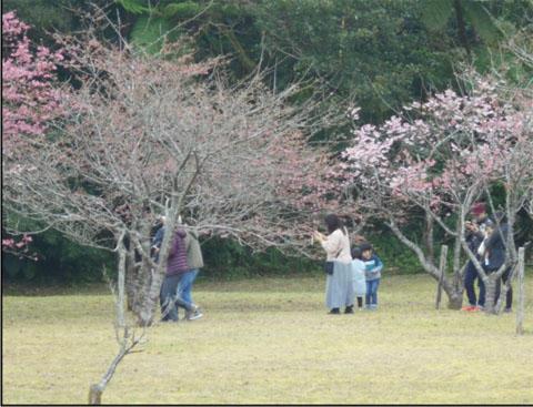 200207-1月「奄美 戦跡めぐり報告」-4-0.jpg