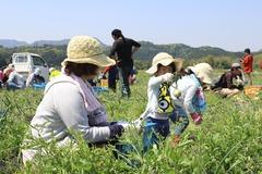 180428玉ねぎ収穫交流会02.JPGのサムネイル画像