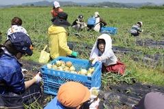 180428玉ねぎ収穫交流会03.JPG