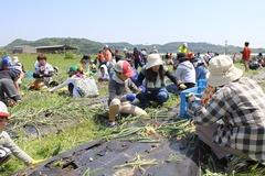 180428玉ねぎ収穫交流会05.JPG