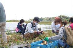 210424たまねぎ収穫03.JPG